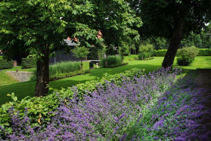 landelijk tuin nepeta