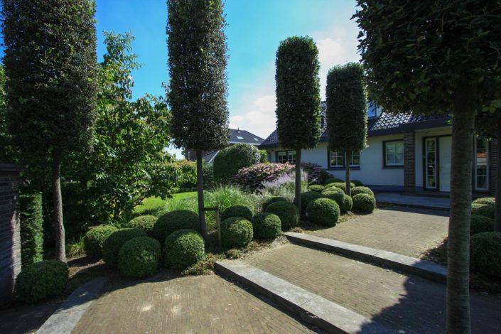 Eigentijdse tuin beplanting