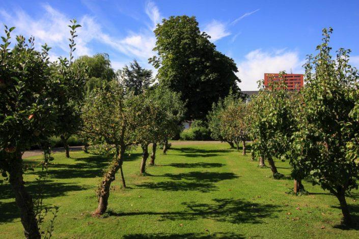 landelijke tuin fruitboom appel